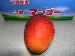 2007-7-mango